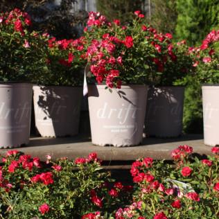 Boutique Gardens Garden Plants Plant Nursery Grand